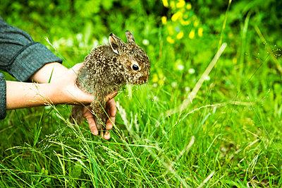 Caucasian farmer holding rabbit in garden - p555m1411596 by Aleksander Rubtsov