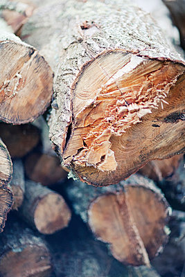 Logs, close-up - p312m996478f by Elisabeth Zeilon