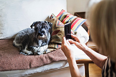 Cropped image of senior woman photographing dog through smart phone at home - p426m1114759f by Maskot