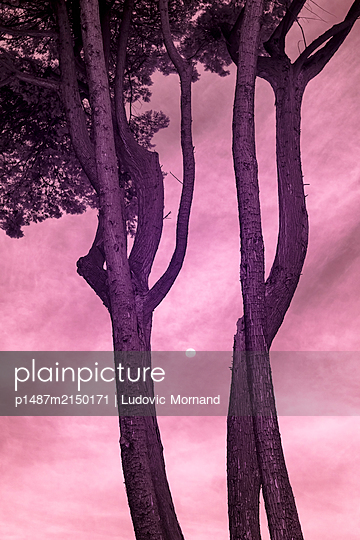 Blood moon between two trees - p1487m2150171 by Ludovic Mornand