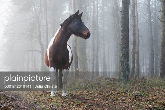 Beautiful horse in foggy forest - p301m2018141 by Julia Christe