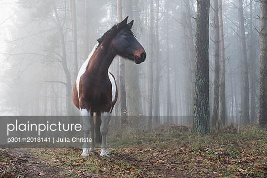 p301m2018141 von Julia Christe