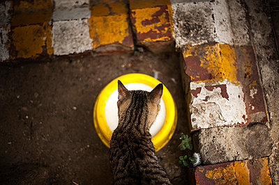 Thursty cat - p1007m886923 by Tilby Vattard