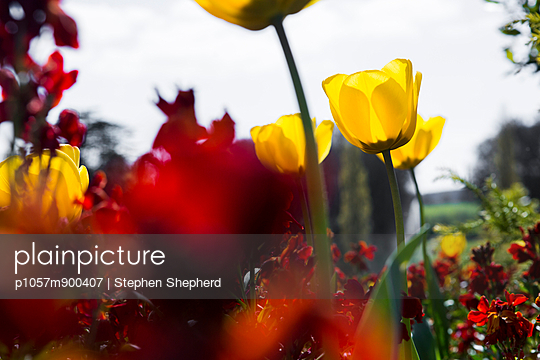 Springtime - p1057m900407 by Stephen Shepherd