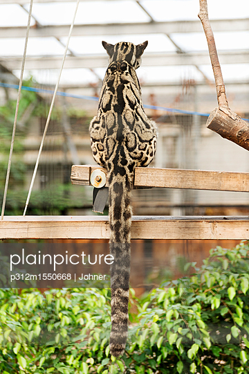 plainpicture - plainpicture p312m1550668 - Sitting wild animal - plainpicture/Johner