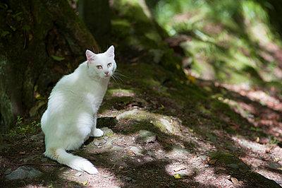 Eine weiße Katze blickt neugierig - p1065m948657 von KNSY Bande