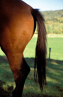 Pferdehintern - p2190042 von Carsten Büll