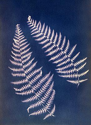 Farnblätter - p945m2157551 von aurelia frey