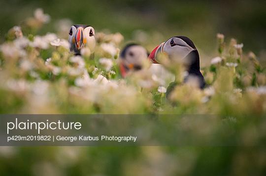 p429m2019822 von George Karbus Photography