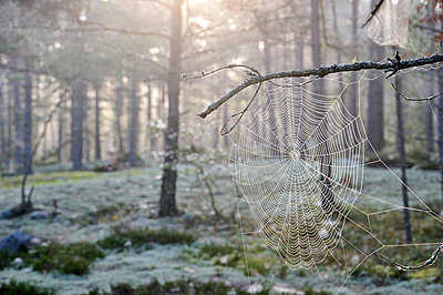 Spider web in forest - p575m714898 by Stefan Ortenblad