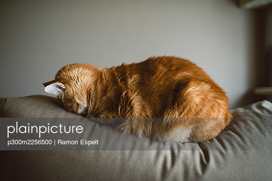 Ginger cat sleeping with face on couch at home - p300m2256500 by Ramon Espelt
