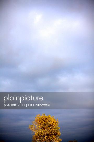 Baumkrone - p545m817071 von Ulf Philipowski