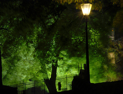 Eerie light through trees with a streetlight and lights from windows just visible behind - p1072m829094 by John Stephenson