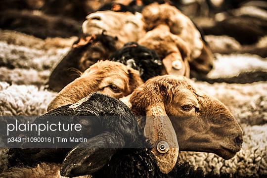 p343m1090016 von Tim Martin