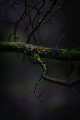 Moss - p1088m902178 by Martin Benner