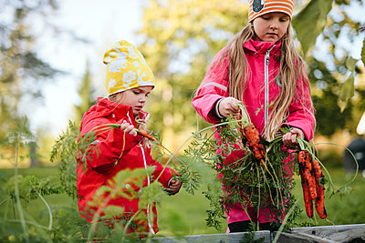 Girls holding carrots on vegetable patch - p312m2191143 by Matilda Holmqvist