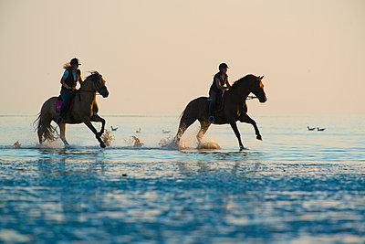 Horseriding; paardrijden;  - p1144m967168 by Nico van  Kappel