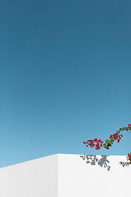 Corner of a white house - p5864408 by Kniel Synnatzschke