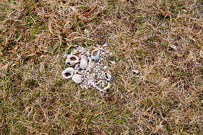 Collection of shells and small stones on a patch of grass - p1047m1531872 by Sally Mundy