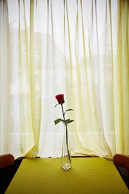 Rose - p1272m1333317 von Steffen Scheyhing
