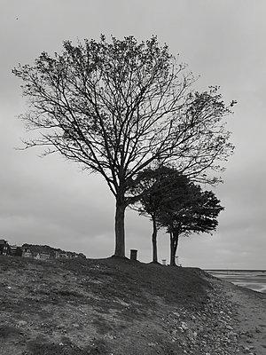 Trees on the coasst - p945m2215216 by aurelia frey