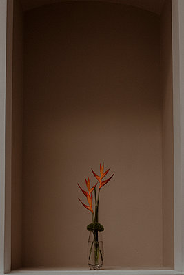 Vase with orange strelitzia flowers - p300m2250848 by MORNINGVIEW AGENCY