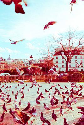 Viele Tauben auf Patz in Paris - p432m1222239 von mia takahara