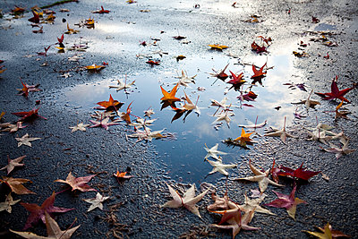 Leaves on street, Seattle, Washington - p555m1453609 by Spaces Images