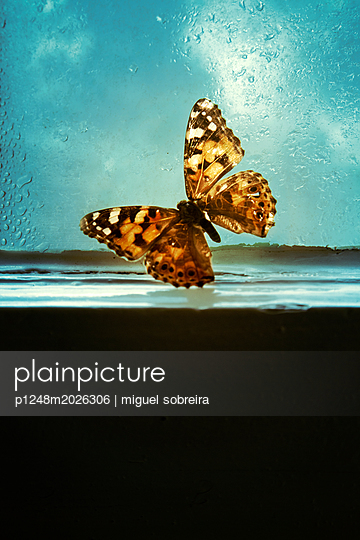 Schmetterling am Fenster - p1248m2026306 von miguel sobreira
