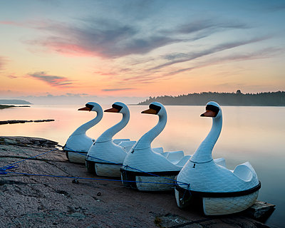 Swan boats at sunset - p312m1471475 by Mikael Svensson