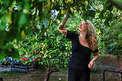 Smiling woman picking apples - p312m2080588 by Pernille Tofte