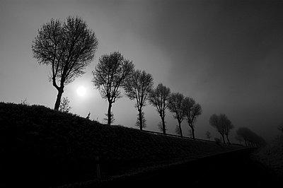Baumreihe im Winter - p8290030 von Régis Domergue