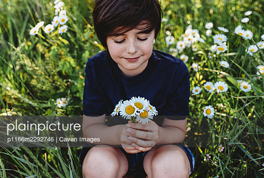 Young boy holding a bouquet of daisies in a field of flowers. - p1166m2292746 by Cavan Images