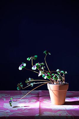 Lucky clover - p1149m2086702 by Yvonne Röder