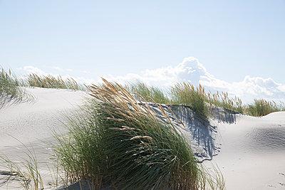 Dunes - p295m2013541 by Nanine Renninger