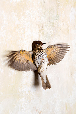 Toter Vogel - p451m1214874 von Anja Weber-Decker