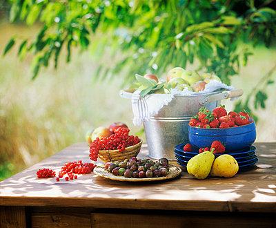 Frisches Obst im Garten - p5940033 von Freudenberger
