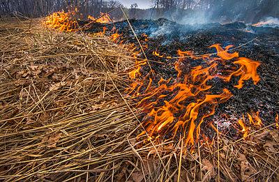 Fire in prairie, Minnesota - p884m1356764 by Jim Brandenburg