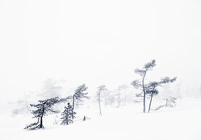Winter landscape - p992m982402 by Carmen Spitznagel