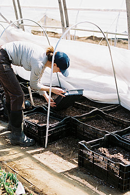 Commercial female flower farmer picking up trays in greenhouse - p1166m2268655 by Cavan Images