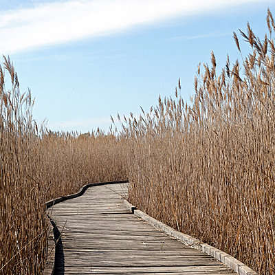 Wooden trail in Camargue - p7780062 by Denis Dalmasso