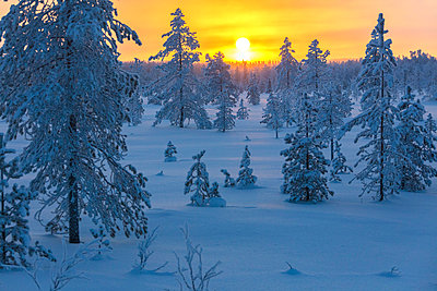 Sunset on frozen forest covered with snow, Luosto, Sodankyla municipality, Lapland, Finland - p651m2033201 by Roberto Moiola