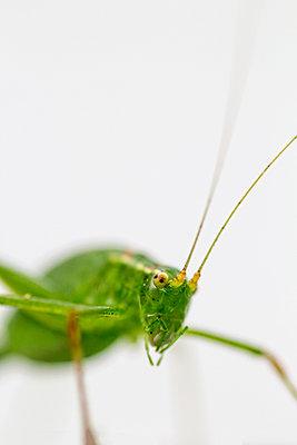 Grasshopper - p739m931404 by Baertels