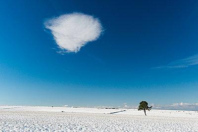 Winter - p829m949336 von Régis Domergue