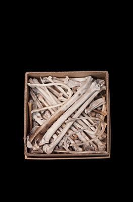 Schachtel mit Knochen - p971m931450 von Reilika Landen