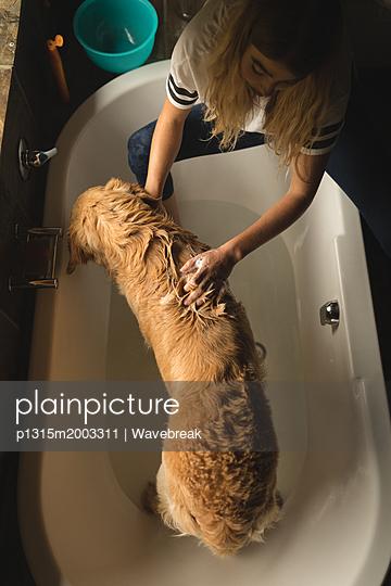 Hund in der Wanne - p1315m2003311 von Wavebreak