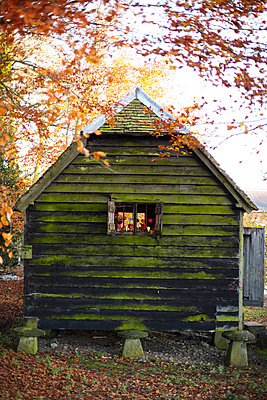 Rustic wood cabin in Autumn woodland with fallen leaves  UK - p349m2167838 by Sussie Bell