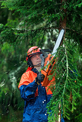 Lumberjack woman cutting tree in forest - p575m714875 by Berit Djuse