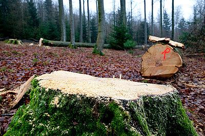 Beech forest - p979m909839 by Dott