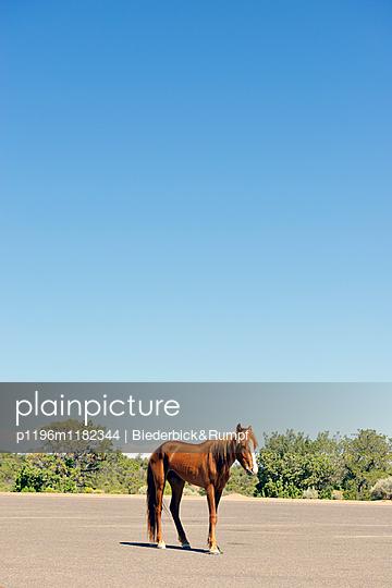 Einsames Pferd - p1196m1182344 von Biederbick&Rumpf